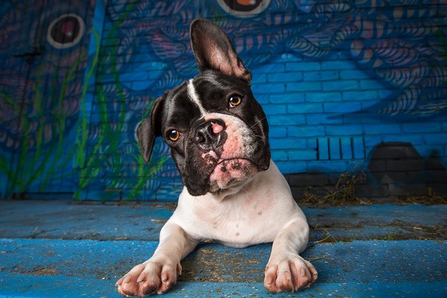Honden fotografie door Natasja Noordervliet