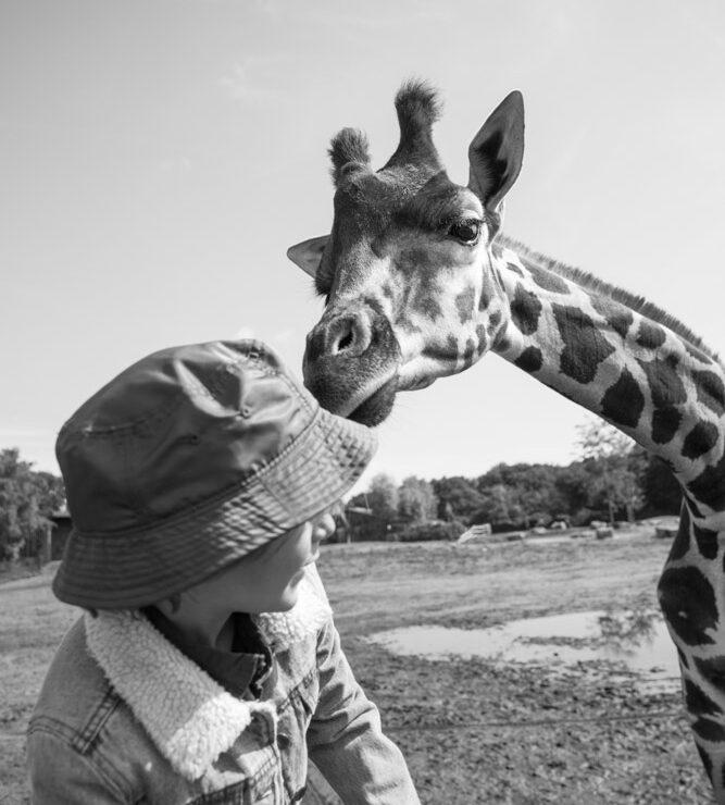 KekMama_Safari