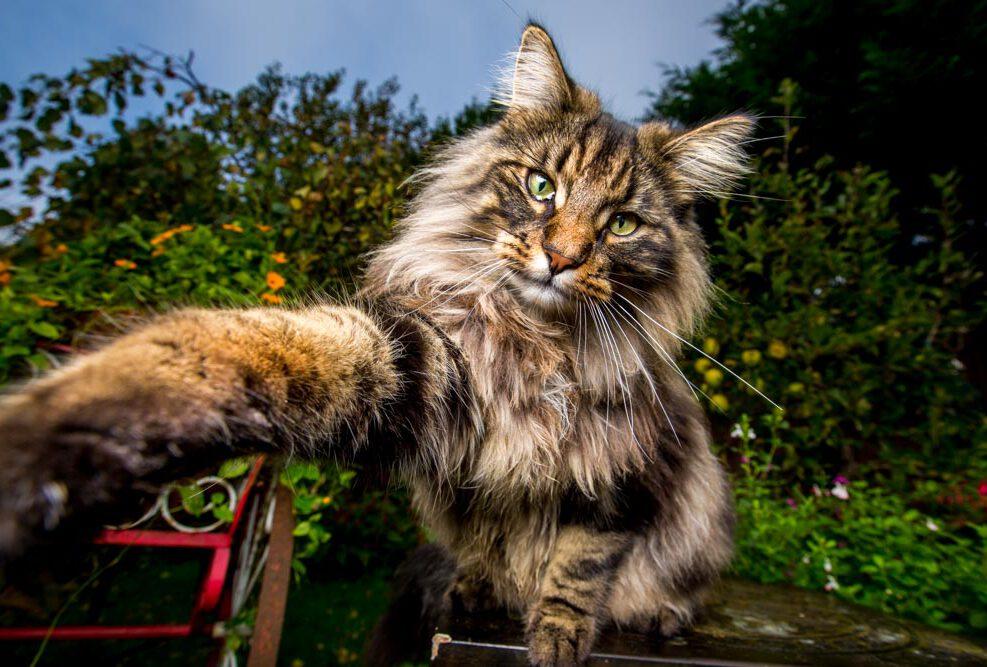 flokkie_cat